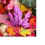 A sneak peak at Autumn's treats